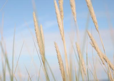 landschaft-09